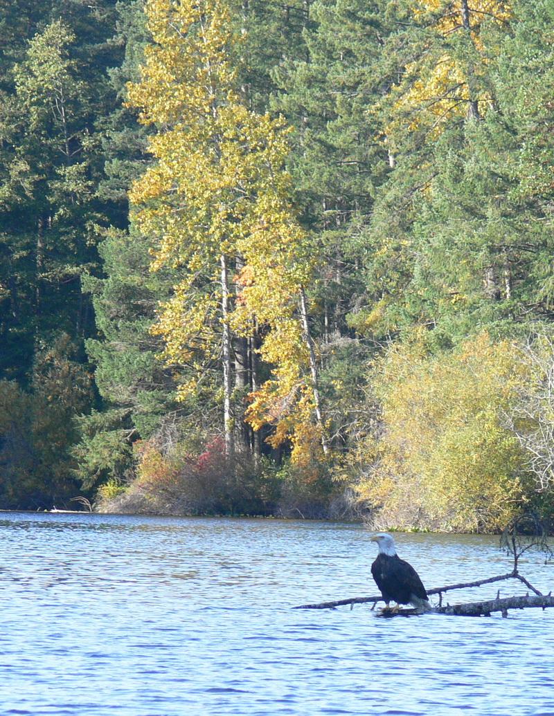 Fishing Sights Web 15