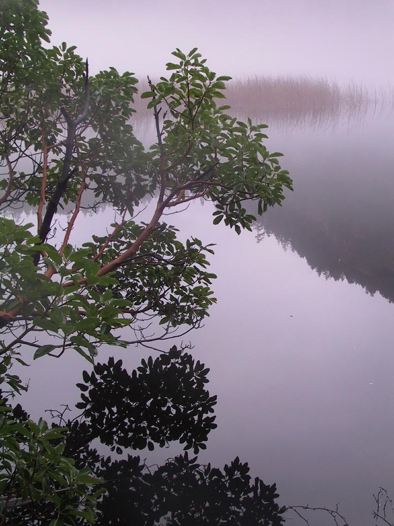 Fishing Sites Web 02