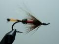 Iris Flies 40