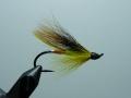 Iris Flies 27